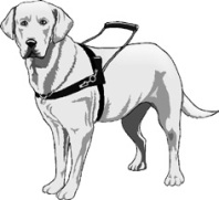 Service Animal Materials for Your Cruise Provided by Special Needs Group